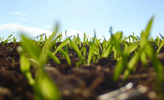 Почвы Одинцовского района или на какой урожай рассчитывать садоводу